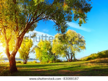Group of autumn trees standing on a meadow by river