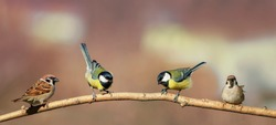group of beautiful little birds sitting on a branch in Sunny Park