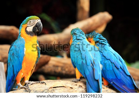 Group of beautiful parrot macaws on  tree