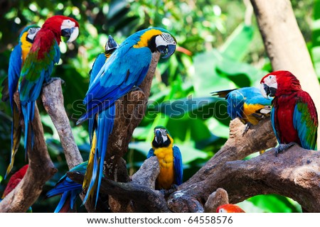 Stock Photo group of beautiful parrots in a tree