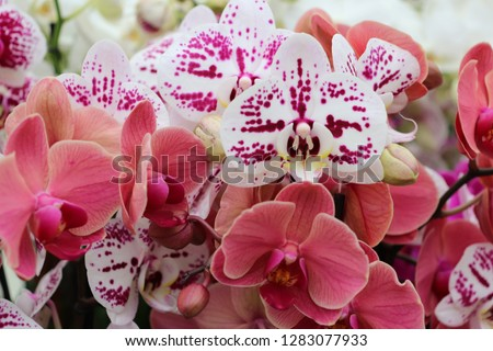 Group of beautiful vibrant pink orchids together in a field outside  #1283077933
