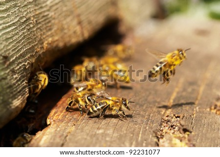 Group of bees near a beehive, in flight
