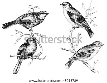 Group of birds - stock photo