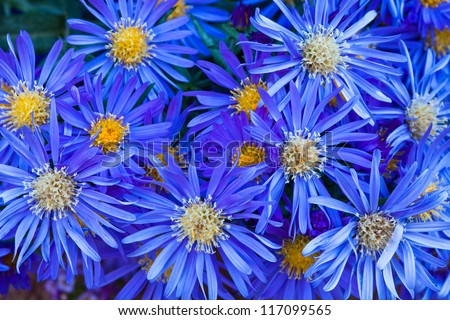 Group of Blue Flowers with Yellow Centers