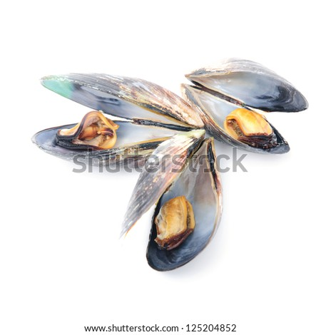 group of boiled mussels in shells isolated on white background