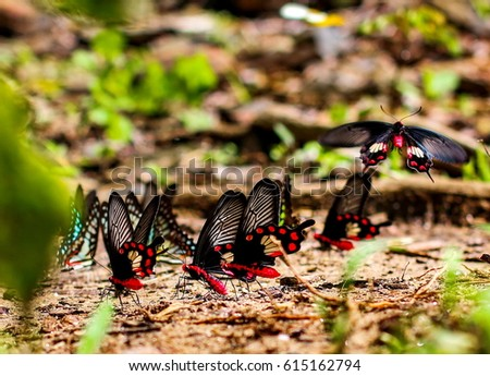 Group of butterfly #615162794