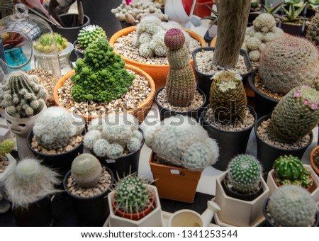 Group of cactus in agriculture trees farm