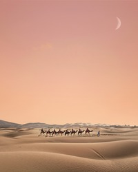 Group of camels crossing the dunes in Merzouga, Sahara desert