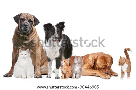 Group of Cats and Dogs in front of a white background - stock photo