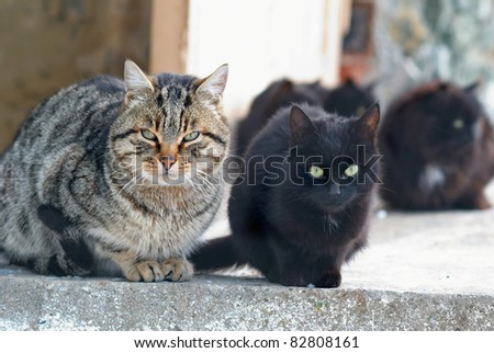 Group of cats sitting and looking at camera