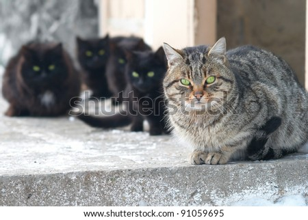 Group of cats sitting and looking at camera - stock photo