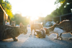 group of cats with different hair colors sitting on the road