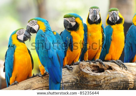 group of colorful macaw on the tree
