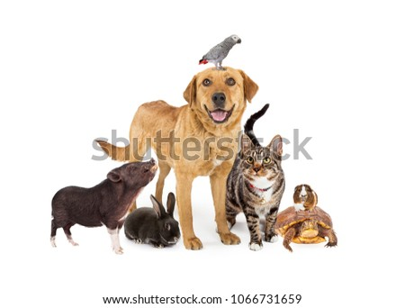 Group of common domestic animals together on white #1066731659