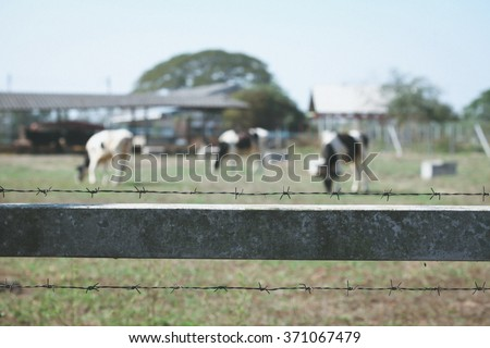group of cow behind the barb wire fence in livestock  ストックフォト ©