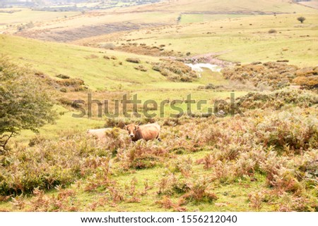 group of cows grazing on large green pastures - domestic animal concept #1556212040