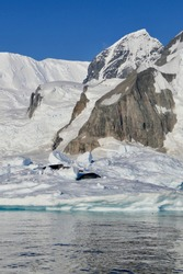 Group of crabeater seal in Antarctic landscape, on snow, bright sun, Antarctica