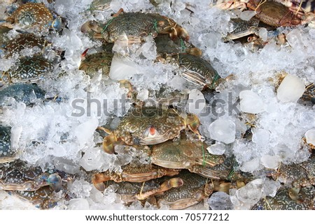 Group of crabs in the local market, Thailand