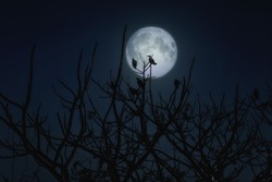 Group of crows sitting on a branch against a full moon. Halloween theme
