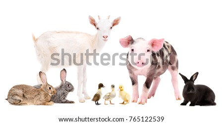 Group of cute farm animals together, isolated on white background