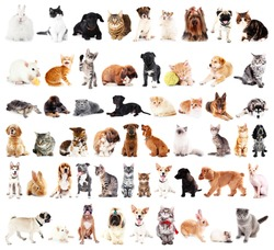 Group of cute pets, isolated on white