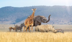 Group of cute young safari zoo animals together in grasslands of Kenya Africa