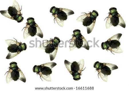 Finding Dead Flies In House http://www.shutterstock.com/pic-16611688/stock-photo-group-of-dead-house-flies-isolated-on-white.html