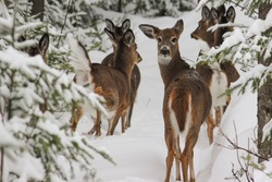 Group of deers standing in the forest
