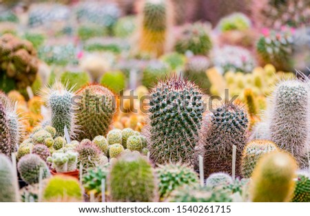 Group of different cactus plants in botany garden #1540261715