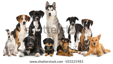 Group of different dogs