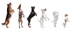 Group of different purebred dogs, pets, big and little sitting isolated over white studio background. Collage. Concept of care, friendship, domestic animals, love. action, movement. Copy space for ad.