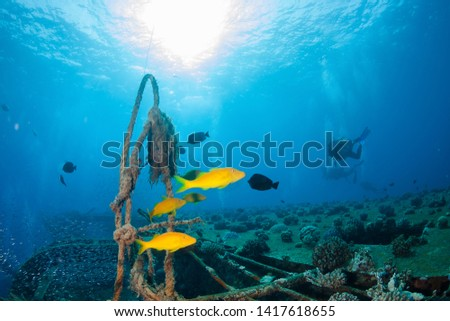 Group of divers explore the wreck, Red Sea, Egypt. #1417618655