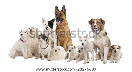 group of dog : german shepherd, border collie, Parson Russell Terrier and some crossbreed in front of a white background