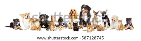 group of dogs and cats on a white background #587128745