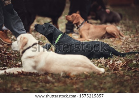 Group of dogs at the obedience training lesson. Сток-фото ©