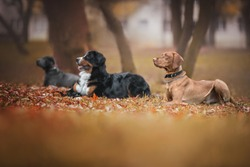 Group of dogs at the training lesson.