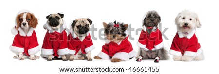 Group of dogs in a row dressed as Santa Claus in front of white background