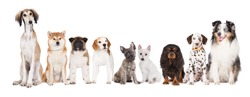 group of dogs on white background