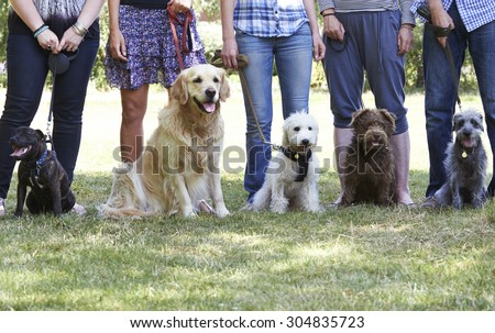 group of dogs with owners at...