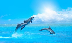 Group of dolphins jumping on the water