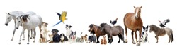 group of domestic animals and pets in front of white background