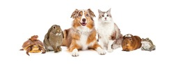 Group of domestic animals sized to fit popular social media timeline cover place holder