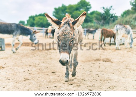 Group of donkeys walking at the farm.
