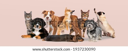 group of eight cats and dogs isolated on a pink pastel background