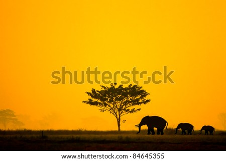 Group of elephant in thailand