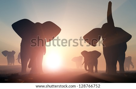 Group of elephants in the wild.