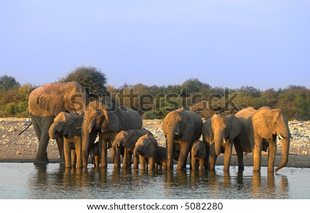 Group of elephants - the shot was taken in Etosha Park, Namibia.