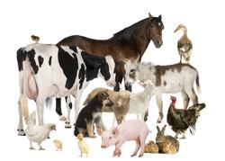 Group of Farm animals: horse, cow, pig, dog, hen, chick, rabbit, duck, turkey, donkey
