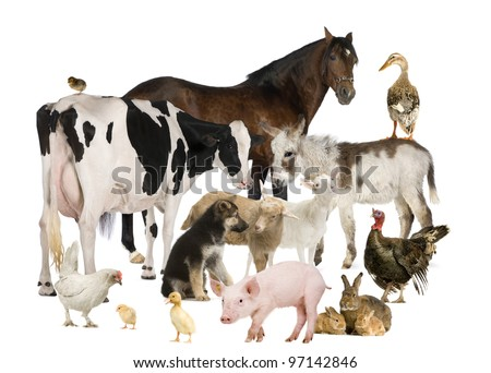 Group of Farm animals: horse, cow, pig, dog, hen, chick, rabbit, duck, turkey, donkey