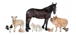 group of farm animals in front of a white background